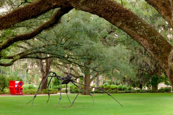 Bourgeois spiderNOMA